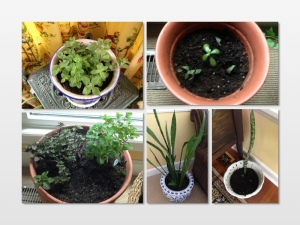 new plants collage